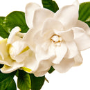 Gardenia Fragrance Oil - White Gardenia Fragrance for Candle & Soap Making
