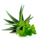 Green Clover & Aloe Fragrance Oil for Candles, Soaps, Lotions, and more!