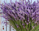 Lavender Fragrance Formulator