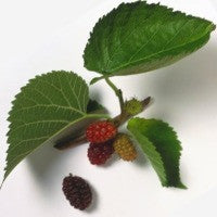 Mulberry Candle Fragrance Oil