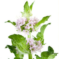 Patchouli Essential Oil - Pure Essential Oil for Candle & Soap Making