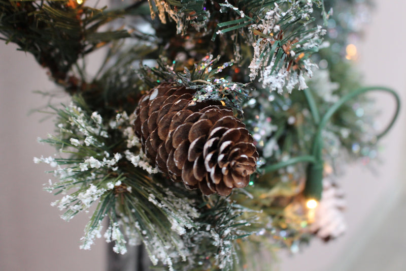Pinecones - Frosted Pine Fragrance Oil