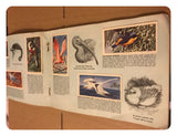 Brooke Bond Tea Cards Tropical Birds - Complete Set in Official Album Book