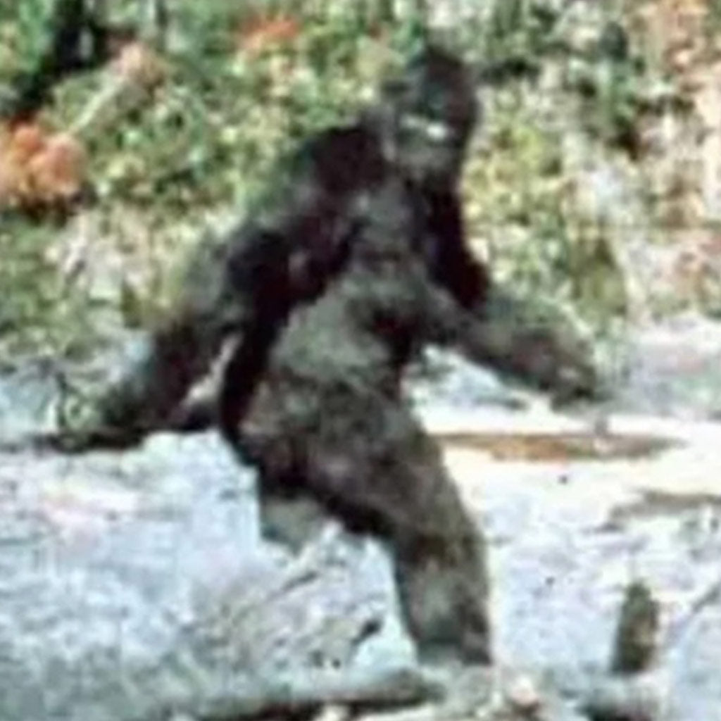 The Elusive BIGFOOT and the Importance of Target ID!!!
