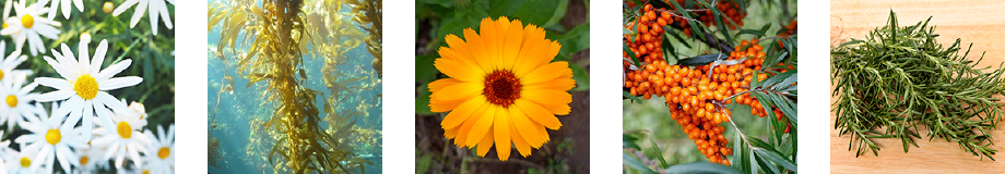 Herbs'Oil Calendula Soothing Gel Cleanser Ingredients