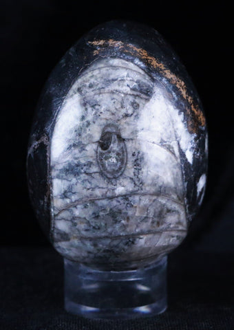 HAND POLISHED ORTHOCERAS FOSSIL STONE SPHERE EGG FROM MOROCCO FREE STAND 45MM-Fossil Age Minerals