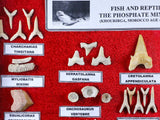 Shark, Fish & Reptile Fossils Educational Framed Wood Display Phosphate Mines Of Morocco - Fossil Age Minerals