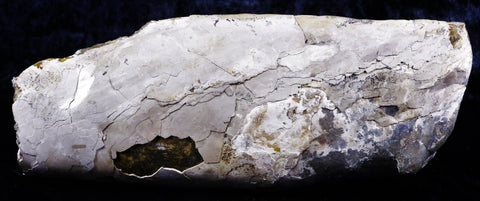 BACULITE OCEAN FOSSIL CEPHALOPOD LATE CRETACEOUS BEAR PAW SHALE MONTANA-Fossil Age Minerals