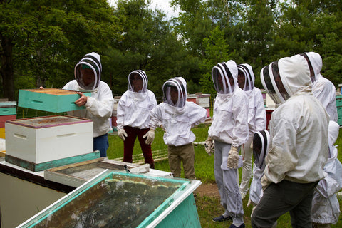 Corporate Beekeeping Programs by Eco Bee