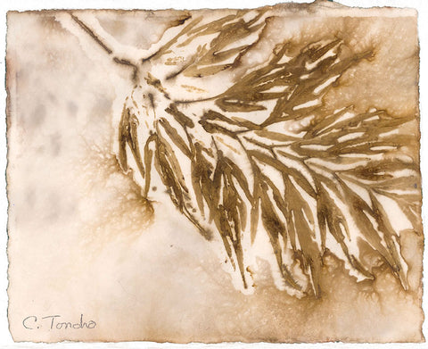 "Cassandra Tondro, leaf print, ""Silk Oak,"" eco-friendly art"