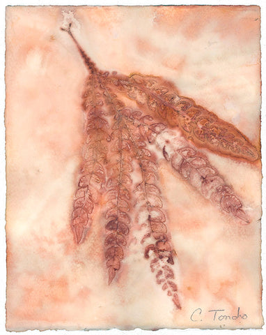 Cassandra Tondro Fernleaf Ironwood leaf print natural art