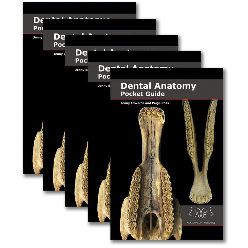 Dental Anatomy Pocket Guide - 5 Pack