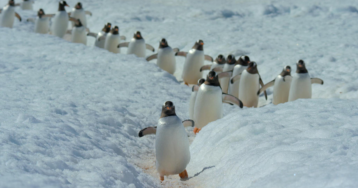Quartz Co. winter jackets Made in Canada, 5 Netflix documentaries, penguins marching in Our Planet
