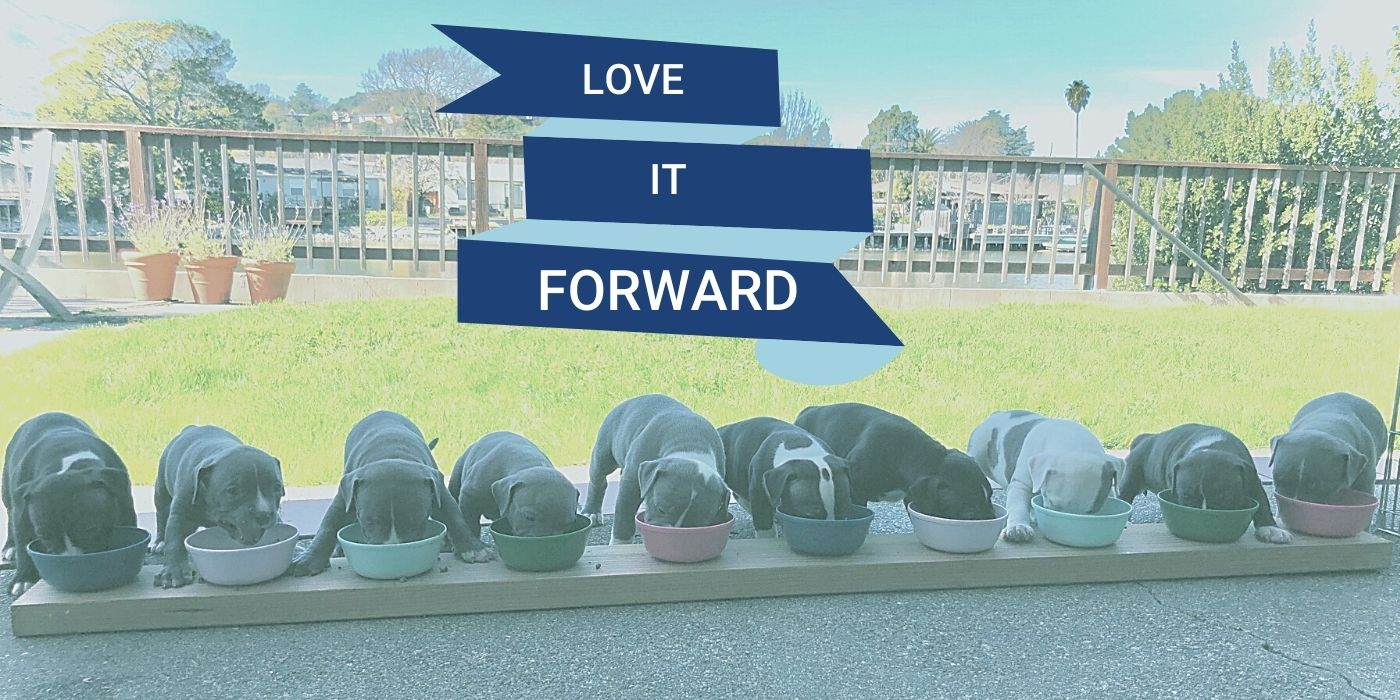 Love It Forward empowers SuperLoveCookies to deliver cookie and personal necessity care packages to our military and help animals find their forever home.
