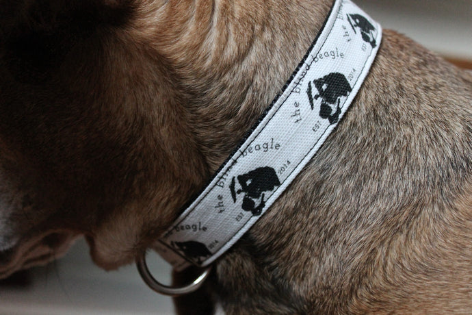 The Blind Beagle Collar