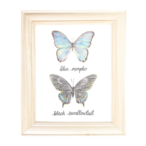 Blue Morpho and Black Swallowtail by Erica Catherine Gallery 209