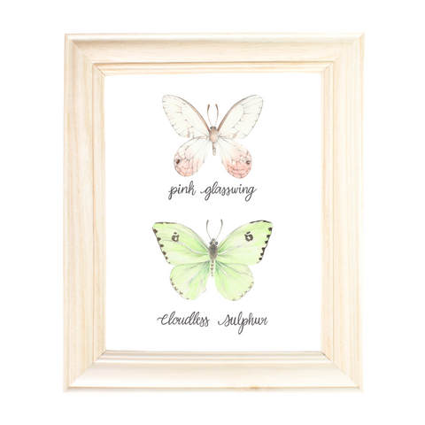 Pink Glasswing Butterfly and Cloudless Sulphur Butterfly