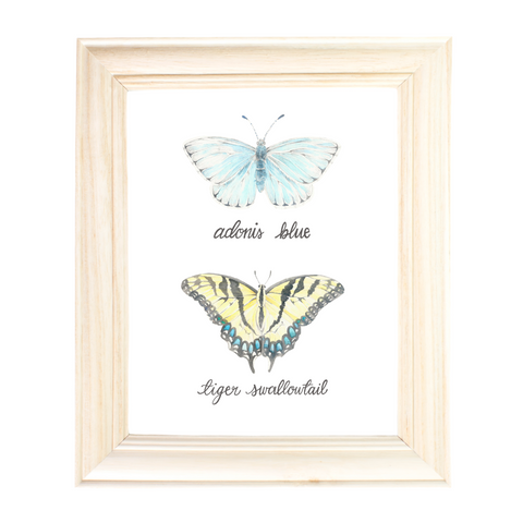 Adonis Blue Butterfly and Tiger Swallowtail Butterfly by Erica Catherine Gallery 209