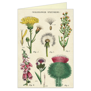 Vintage greeting card featuring various wildflower specimen.