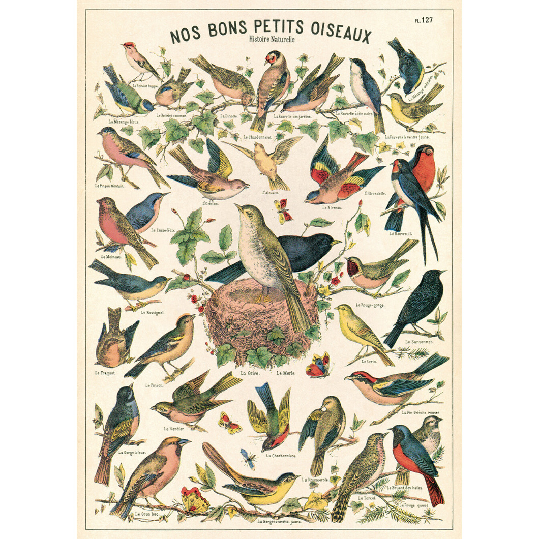 An art print and paper wrap which features various species of songbird