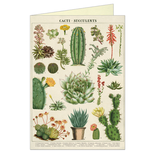 Greeting card that features vintage illustration of succulents and cacti.