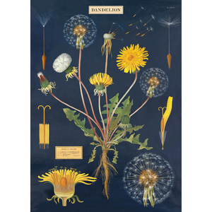 An art print and paper wrap which features the anatomy of a dandelion