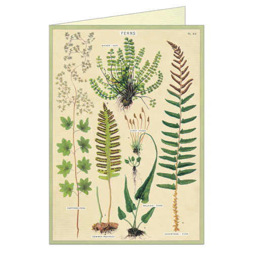 Greeting card that features vintage illustration of ferns.