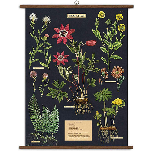 A vintage wall chart featuring various species of herbs, on a dark background.