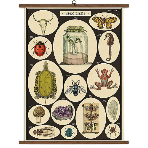 A vintage wall chart featuring illustrations of various specimen that would be found in a biological study.