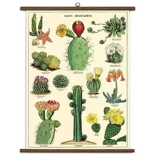 A vintage wall chart featuring various species of succulents and cacti.