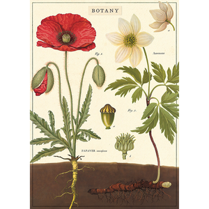 An art print and paper wrap which features various flowers and their roots