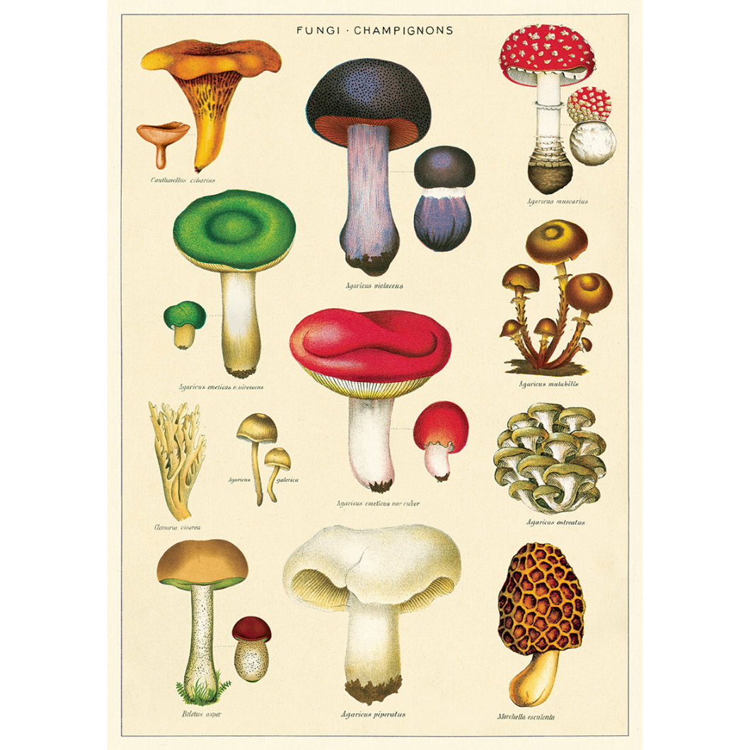 An art print and paper wrap which features various species of fungi
