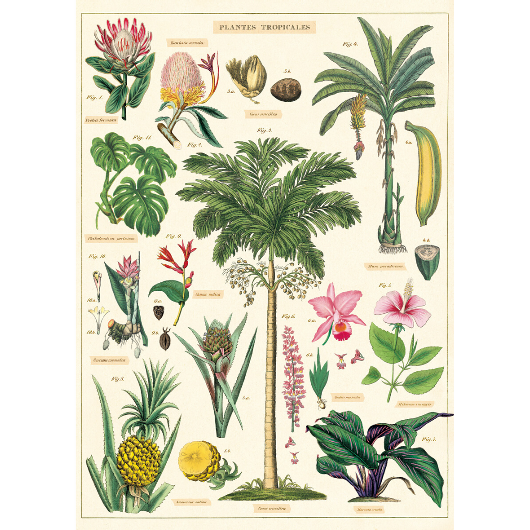 An art print and paper wrap which features various species of tropical trees