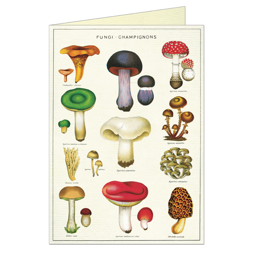 Vintage greeting card featuring various fungi.