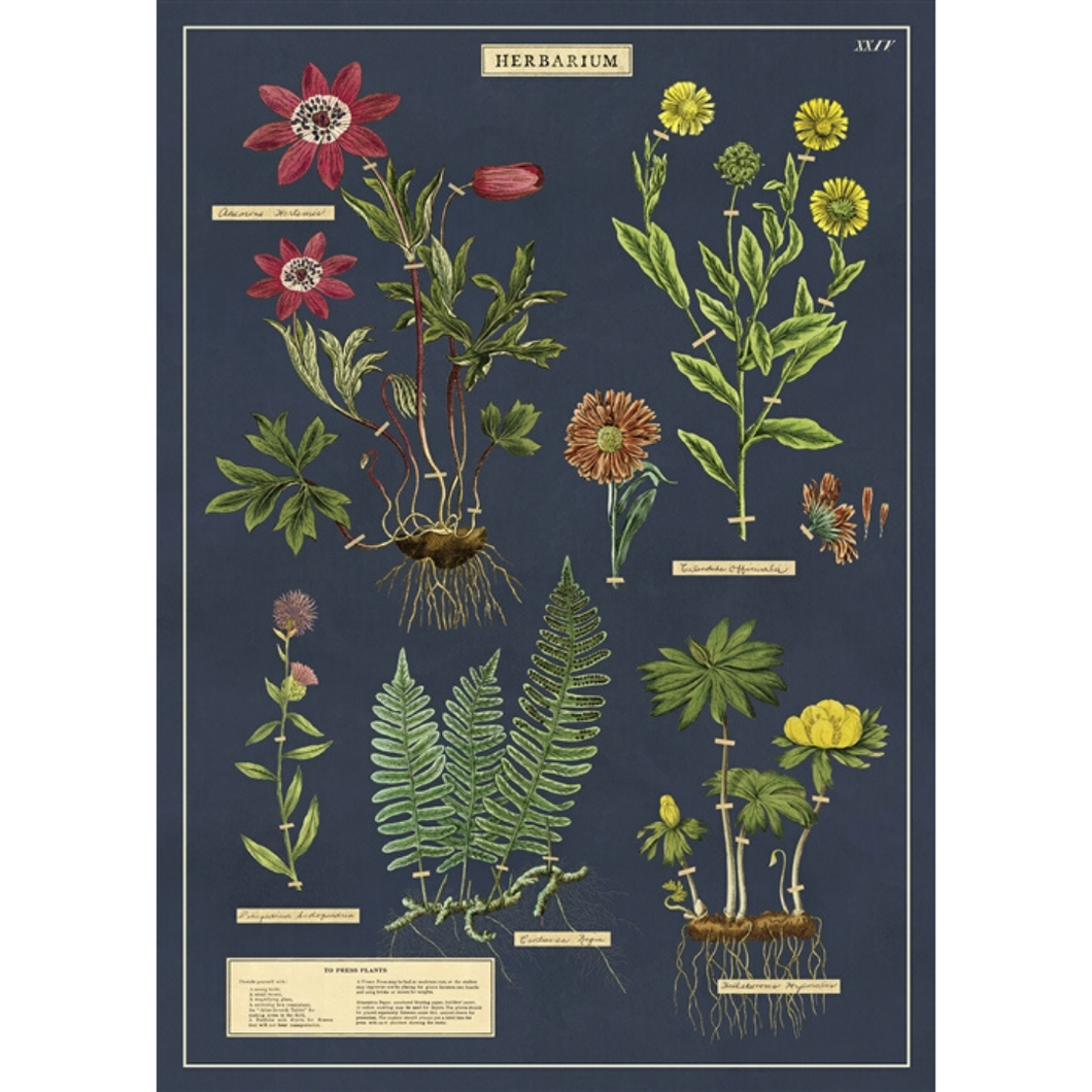 An art print and paper wrap which features various species of flowering plants and herbs