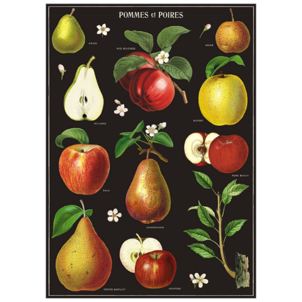 Cavallini & Co. Apples & Pears Wrap
