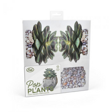 Load image into Gallery viewer, Pop Plants Desk Caddy Echeveria