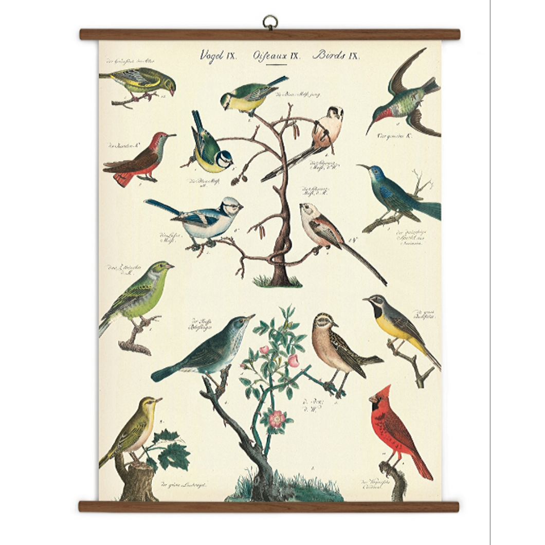 A vintage wall chart featuring various species of birds.