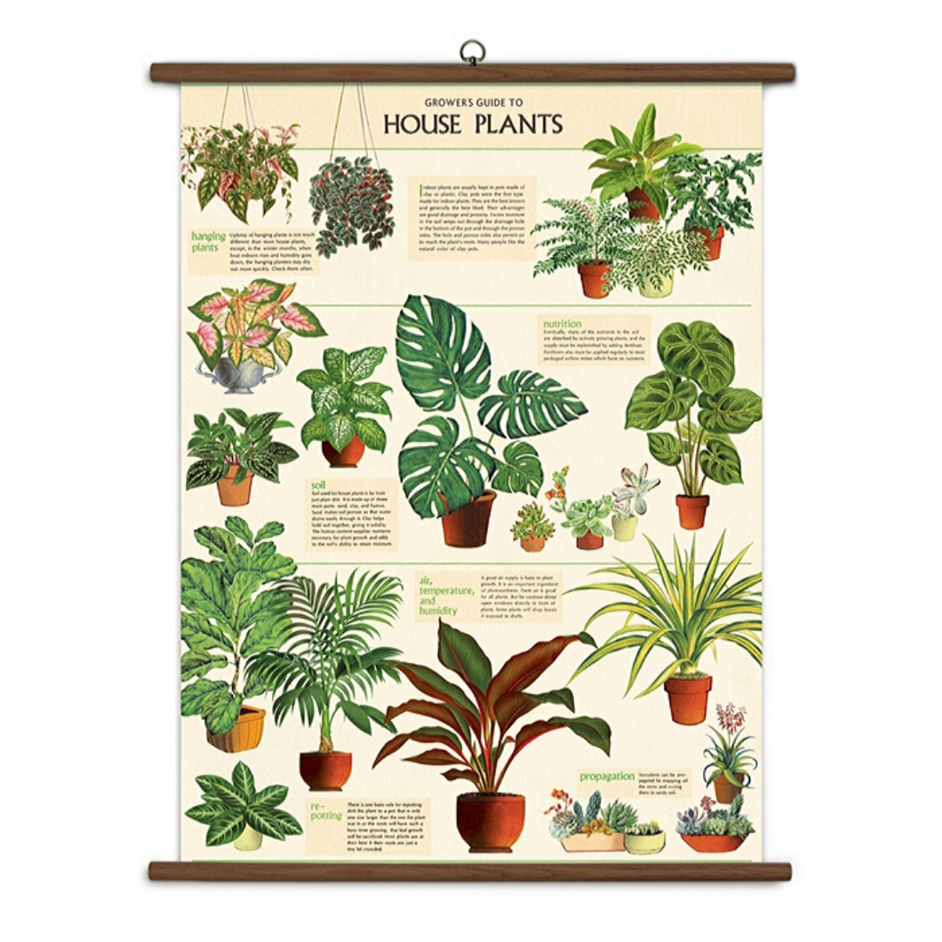 A vintage wall chart featuring various types of house plants.