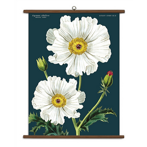 A vintage wall chart featuring two white flowers on a navy blue background.