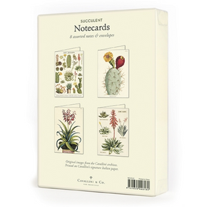 Cavallini & Co. Succulents Boxed Note Cards