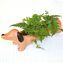 Load image into Gallery viewer, Daisy the Dachshund Planter
