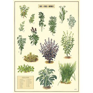 An art print and paper wrap which features various species of herbs on a cream background