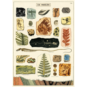 An art print and paper wrap which features various fossils of plants and animals