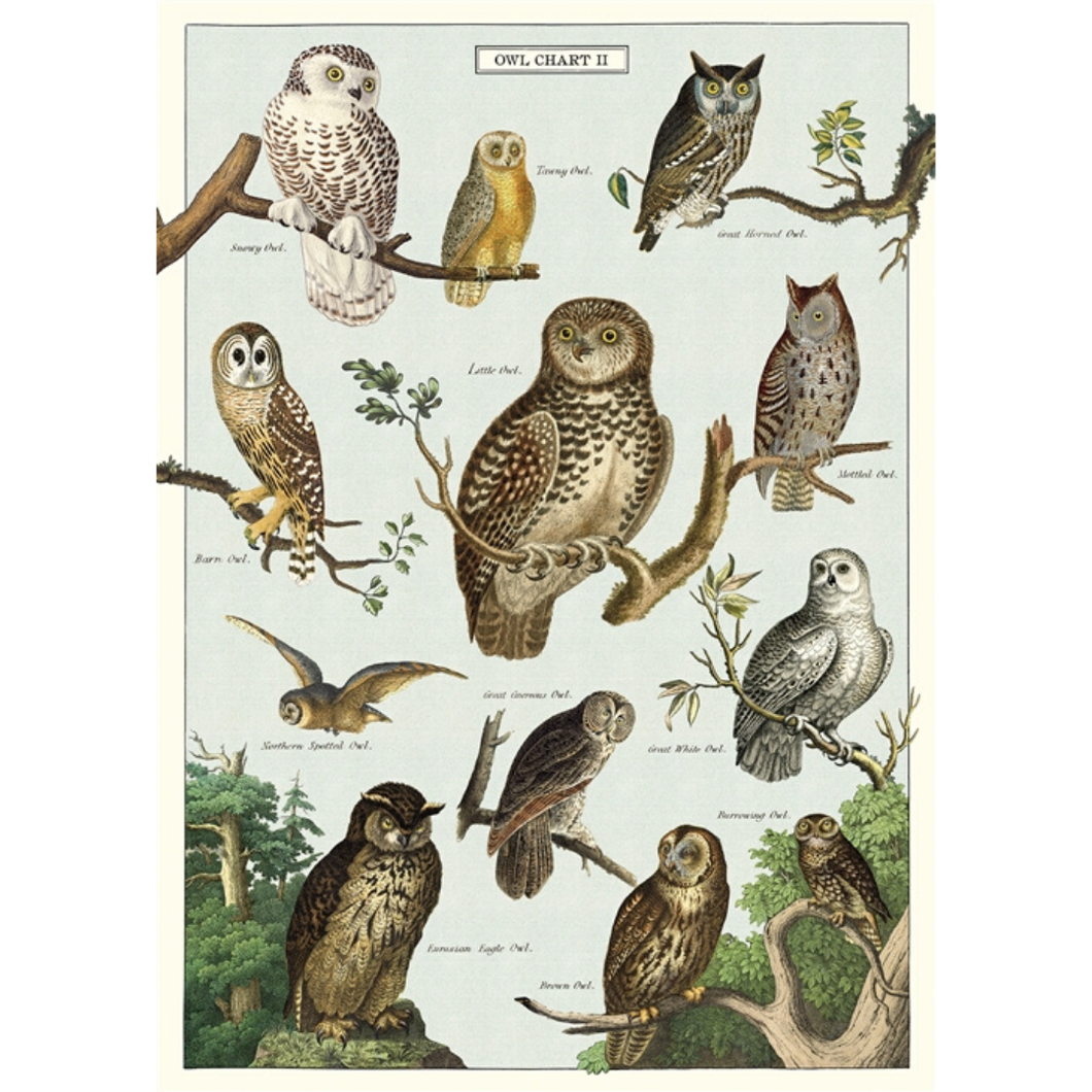 An art print and paper wrap which features various species of owl