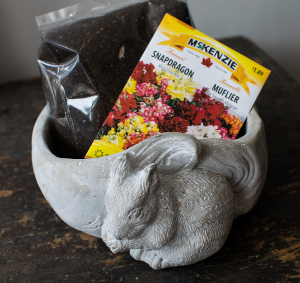 Squirrel Away Cement Planter Kit