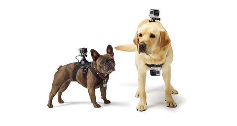 Gopro Fetch Handler Dog Harness Mount - SURF WORLD  - 1