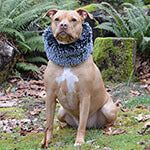 Dog Ruff Collars Mega Menu Image | Handmade in Seattle WA | Pandemonium Millinery