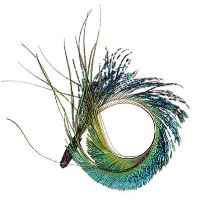 Feather Trim Natural Peacock Sword | Pandemonium Millinery