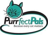 Donate Face Masks to Purrfect Pals | Handmade in Seattle WA | Pandemonium Millinery